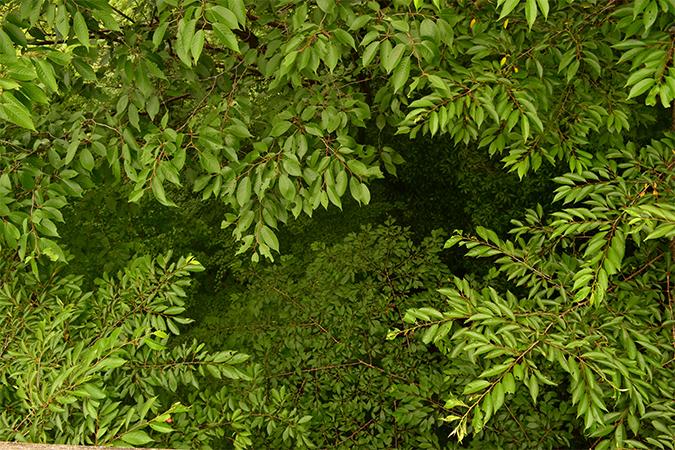 茂る」の意味・由来・語源 - 語源由来辞典