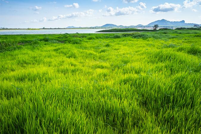 草」の意味・語源・由来・類語 - 語源由来辞典